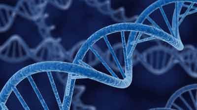 120416 DNA